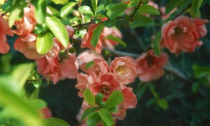 January shrub