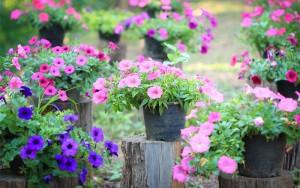 gardening in May