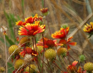 october-flowers