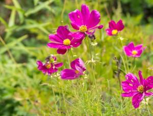 september-flowers